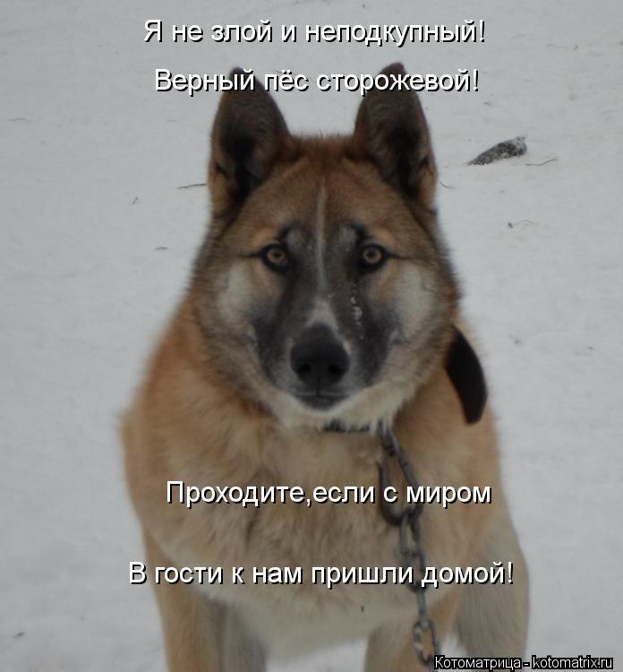 Котоматрица: Я не злой и неподкупный! Верный пёс сторожевой! Проходите,если с миром В гости к нам пришли домой!