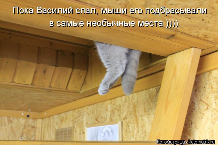 Котоматрица: Пока Василий спал, мыши его подбрасывали в самые необычные места ))))