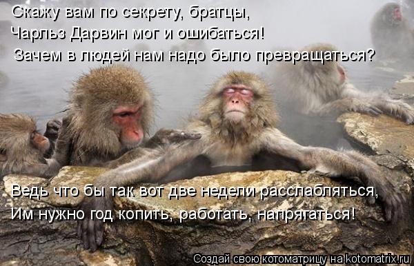 Котоматрица: Ведь что бы так вот две недели расслабляться, Скажу вам по секрету, братцы, Чарльз Дарвин мог и ошибаться! Зачем в людей нам надо было превра