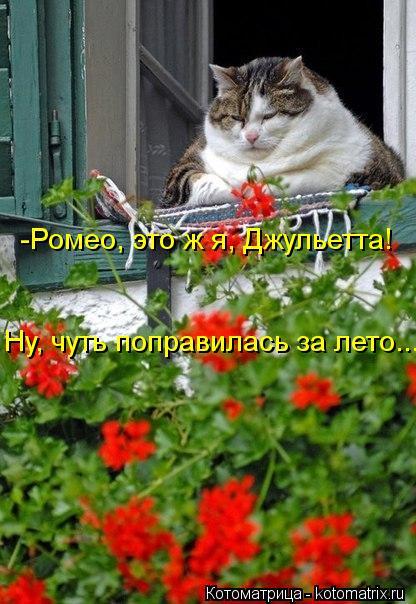 Котоматрица: -Ромео, это ж я, Джульетта! Ну, чуть поправилась за лето...
