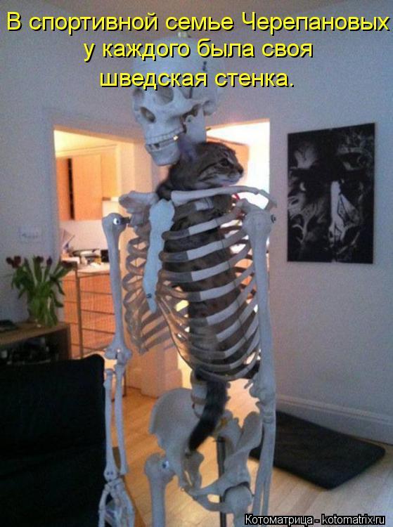 Котоматрица: В спортивной семье Черепановых  у каждого была своя  шведская стенка.