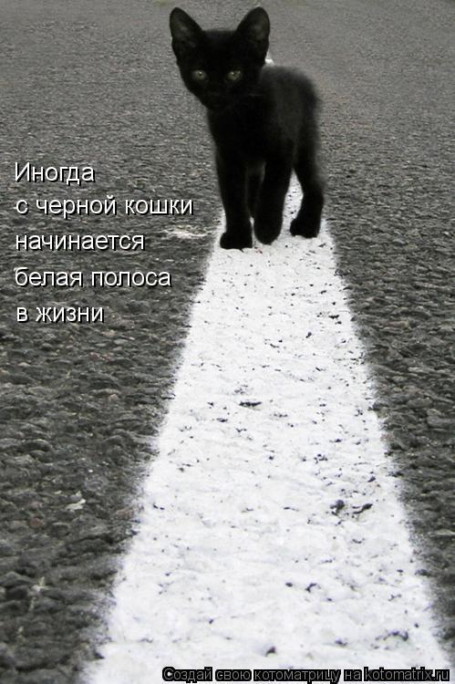 Котоматрица: Иногда с черной кошки начинается белая полоса в жизни