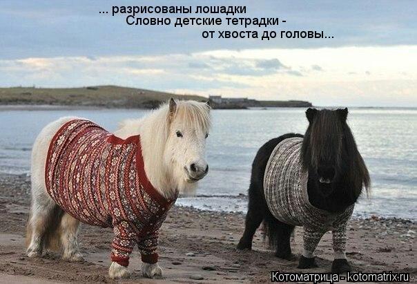 Котоматрица: ... разрисованы лошадки Словно детские тетрадки -  от хвоста до головы...