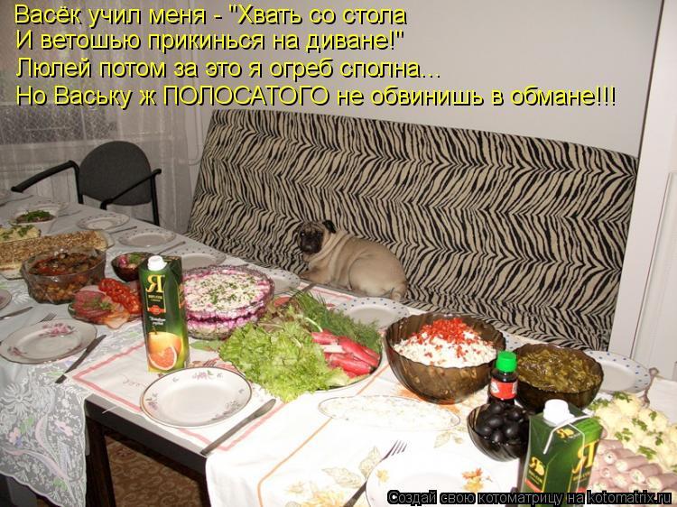 """Котоматрица: Васёк учил меня - """"Хвать со стола И ветошью прикинься на диване!"""" Люлей потом за это я огреб сполна... Но Ваську ж ПОЛОСАТОГО не обвинишь в обма"""