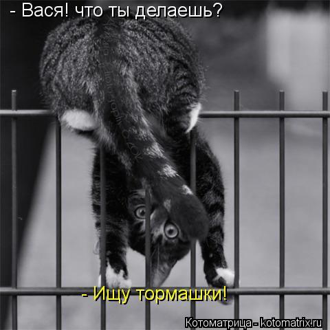 Котоматрица: - Вася! что ты делаешь? - Ищу тормашки!