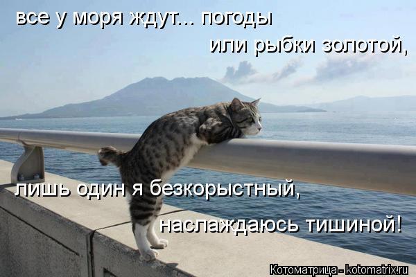 Котоматрица: все у моря ждут... погоды или рыбки золотой, лишь один я безкорыстный, наслаждаюсь тишиной!