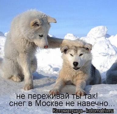 Котоматрица: не переживай ты так! снег в Москве не навечно...