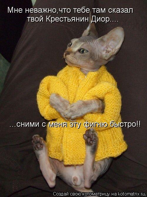 Котоматрица: Мне неважно,что тебе там сказал твой Крестьянин Диор.... ...сними с меня эту фигню быстро!!