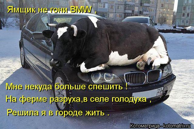 Котоматрица: Ямщик не гони BMW , Мне некуда больше спешить ! На ферме разруха,в селе голодуха , Решила я в городе жить .
