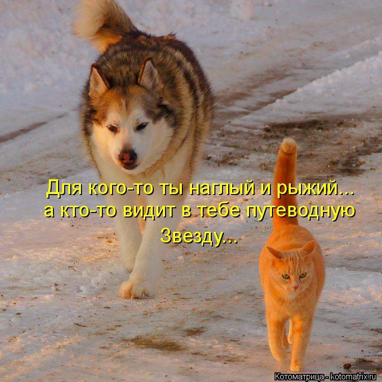 Котоматрица: Для кого-то ты наглый и рыжий... а кто-то видит в тебе путеводную Звезду...