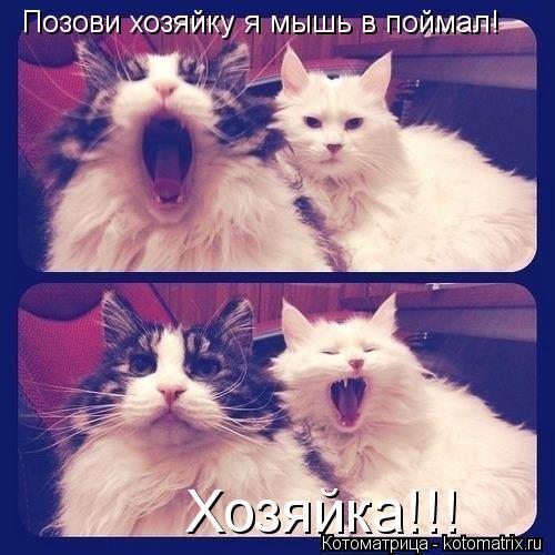 Котоматрица: Позови хозяйку я мышь в поймал! Хозяйка!!!