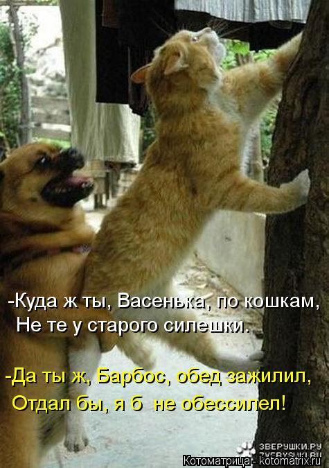 Котоматрица: Не те у старого силешки. -Куда ж ты, Васенька, по кошкам, -Да ты ж, Барбос, обед зажилил, Отдал бы, я б  не обессилел!