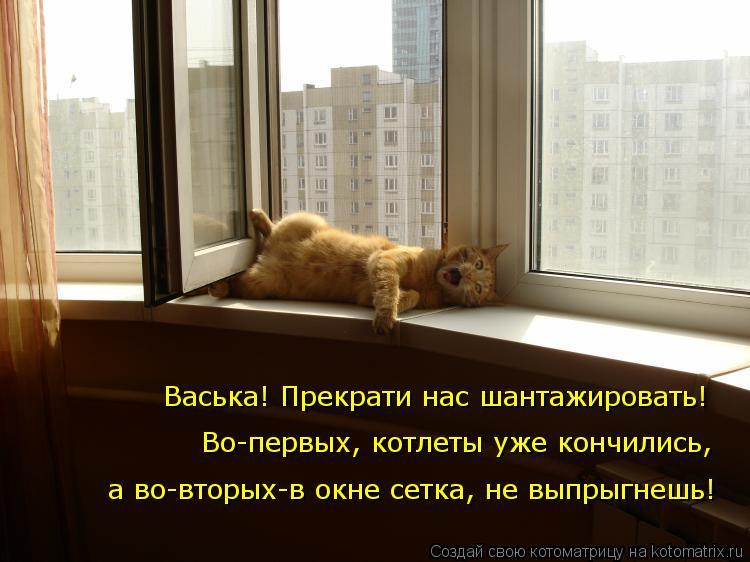 Котоматрица: Васька! Прекрати нас шантажировать! Во-первых, котлеты уже кончились, а во-вторых-в окне сетка, не выпрыгнешь!