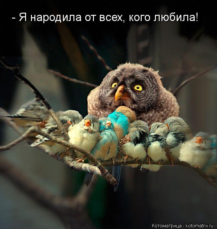 Котоматрица: - Я народила от всех, кого любила!