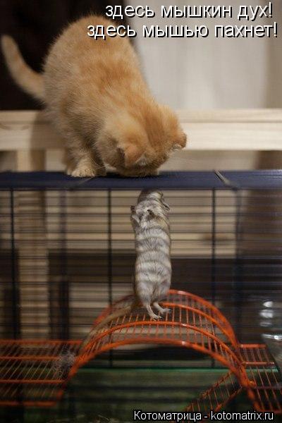 Котоматрица: здесь мышкин дух! здесь мышью пахнет!