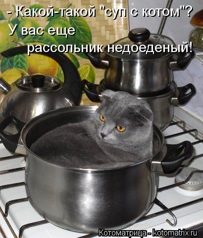"""Котоматрица: - Какой-такой """"суп с котом""""?  У вас еще  рассольник недоеденый!"""
