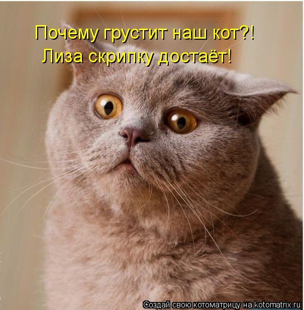 Котоматрица: Почему грустит наш кот?! Лиза скрипку достаёт!