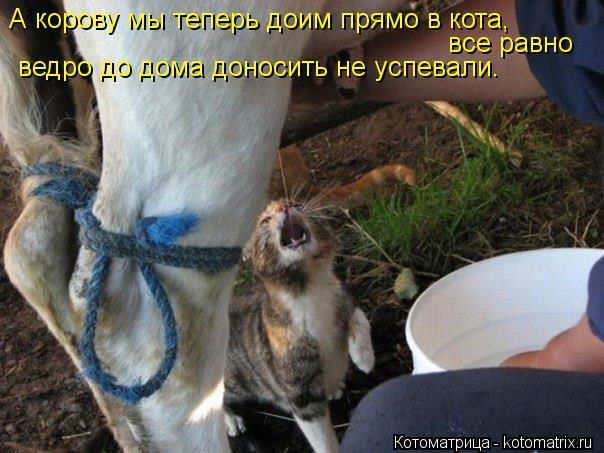Котоматрица: А корову мы теперь доим прямо в кота,  все равно  ведро до дома доносить не успевали.