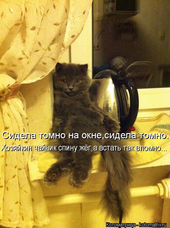 Котоматрица: Сидела томно на окне,сидела томно... Хозяйкин чайник спину жёг,а встать так вломно...