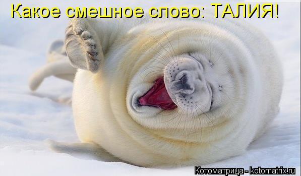 Котоматрица: Какое смешное слово: ТАЛИЯ!