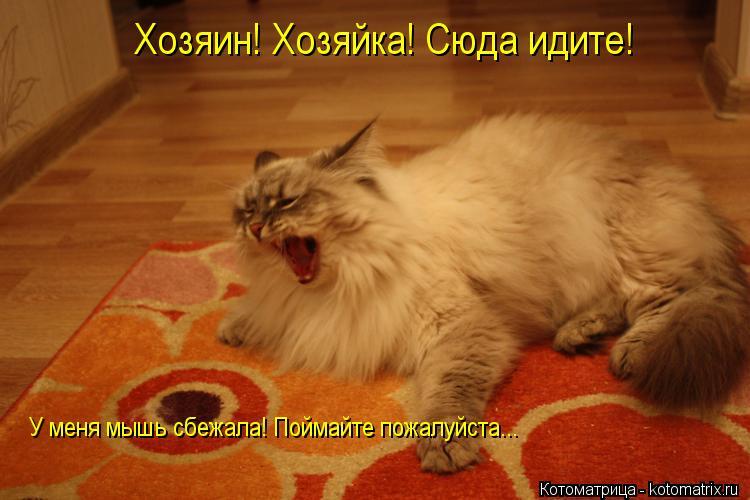 http://kotomatrix.ru/images/lolz/2013/02/08/kotomatritsa_9t.jpg