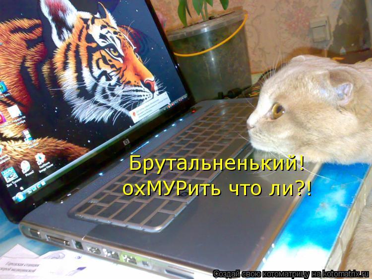 http://kotomatrix.ru/images/lolz/2013/02/08/kotomatritsa_Ov.jpg
