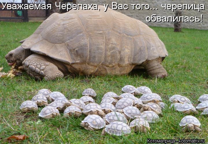 Котоматрица: Уважаемая Черепаха, у Вас того... черепица обвалилась!