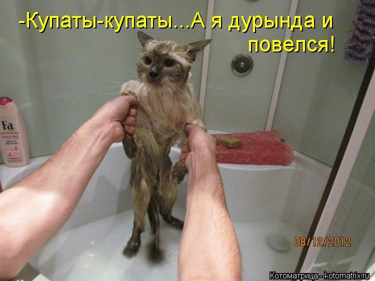 Котоматрица: -Купаты-купаты...А я дурында и  повелся!