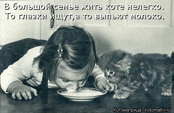 Котоматрица: В большой семье жить коте нелегко. То глазки ищут,а то выпьют молоко.