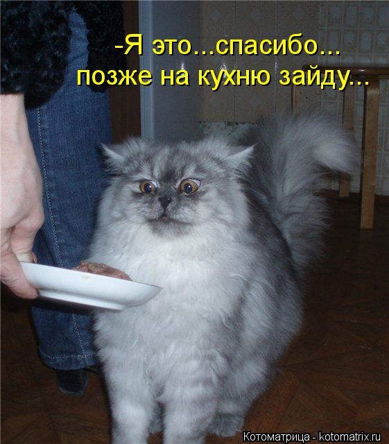 Котоматрица: -Я это...спасибо... позже на кухню зайду...