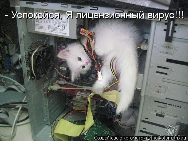 Котоматрица: - Успокойся, Я лицензионный вирус!!!
