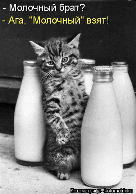 """Котоматрица: - Молочный брат? - Ага, """"Молочный"""" взят!"""
