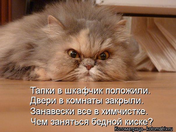 http://kotomatrix.ru/images/lolz/2013/02/10/kotomatritsa_n.jpg