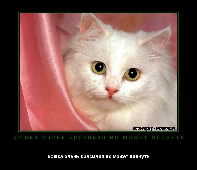 Котоматрица: кошка очень красивая но может цапнуть кошка очень ...