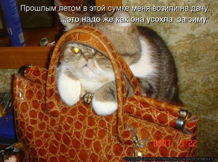 Котоматрица: Прошлым летом в этой сумке меня возили на дачу... ...это надо же как она усохла  за зиму.