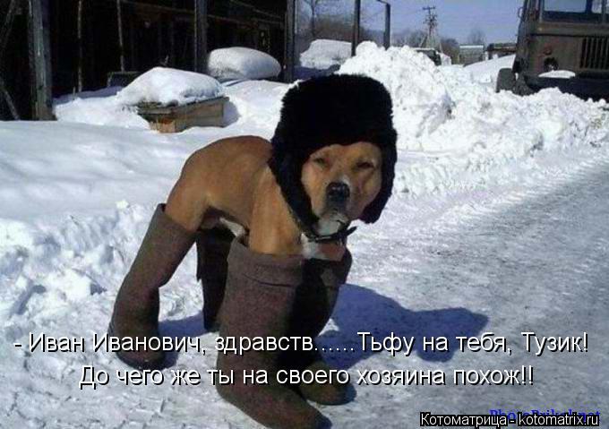 Котоматрица: - Иван Иванович, здравств......Тьфу на тебя, Тузик! До чего же ты на своего хозяина похож!!