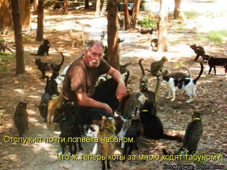 Котоматрица: Отслужил почти полвека чабаном. Что ж теперь коты за мною ходят табуном?!