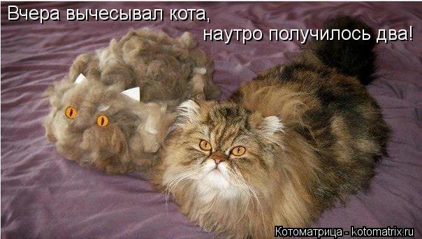 Котоматрица: Вчера вычесывал кота, наутро получилось два!
