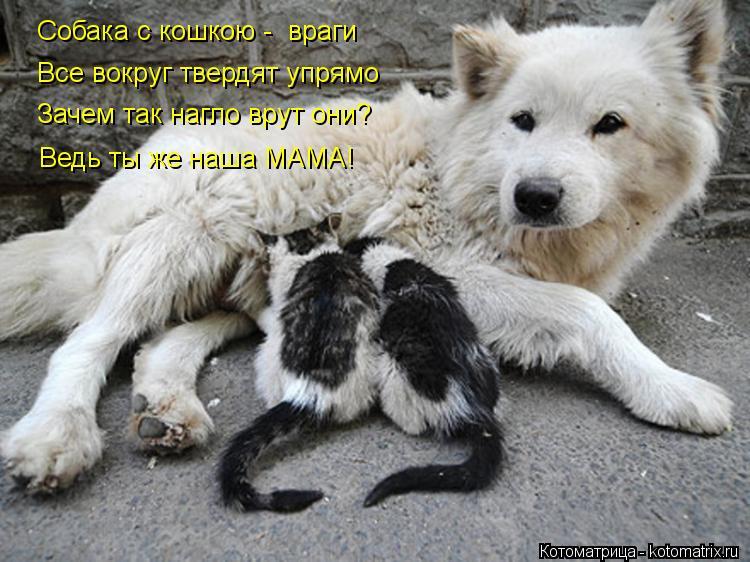 Котоматрица: Собака с кошкою -  враги Все вокруг твердят упрямо Зачем так нагло врут они? Ведь ты же наша МАМА!