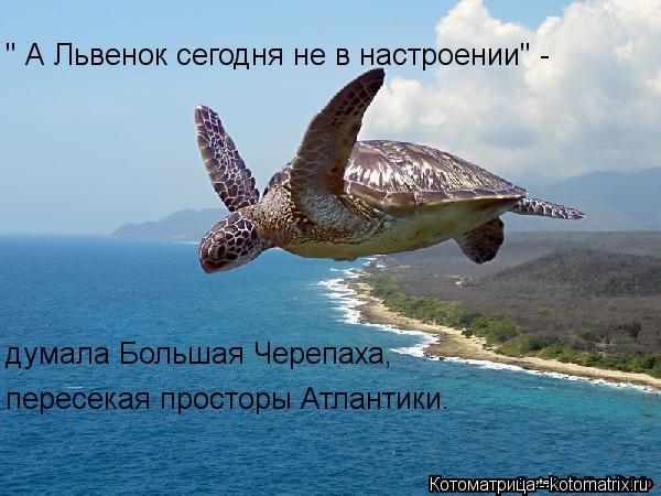 Котоматрица: '' А Львенок сегодня не в настроении'' - думала Большая Черепаха, пересекая просторы Атлантики.