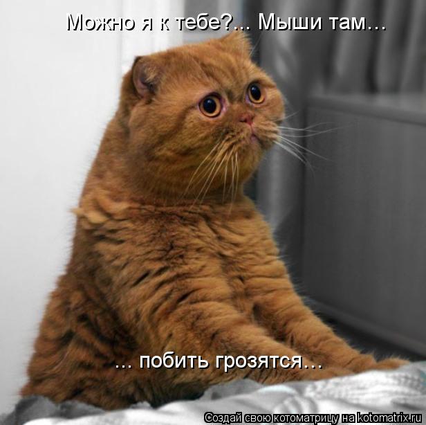 Котоматрица: Можно я к тебе?... Мыши там… ... побить грозятся…