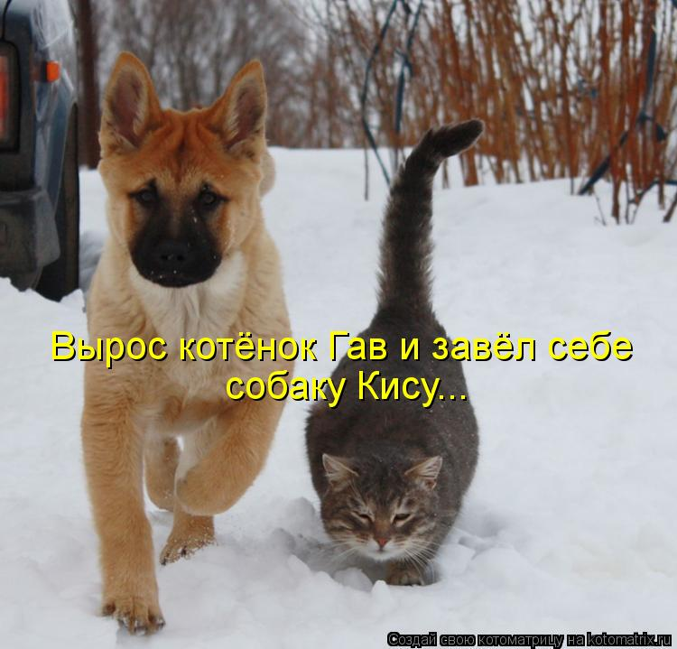 Котоматрица: Вырос котёнок Гав и завёл себе собаку Кису...