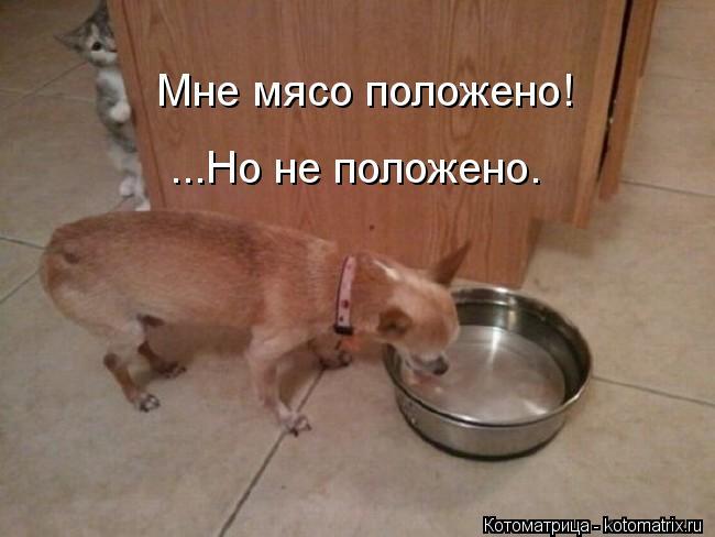 Котоматрица: Мне мясо положено! ...Но не положено.