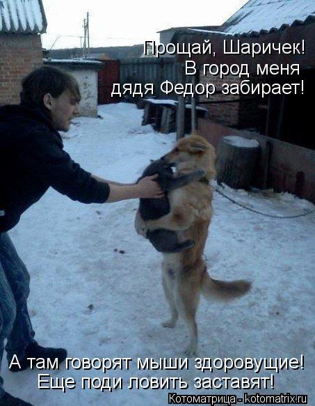 Котоматрица: Прощай, Шаричек! В город меня  дядя Федор забирает! А там говорят мыши здоровущие! Еще поди ловить заставят!