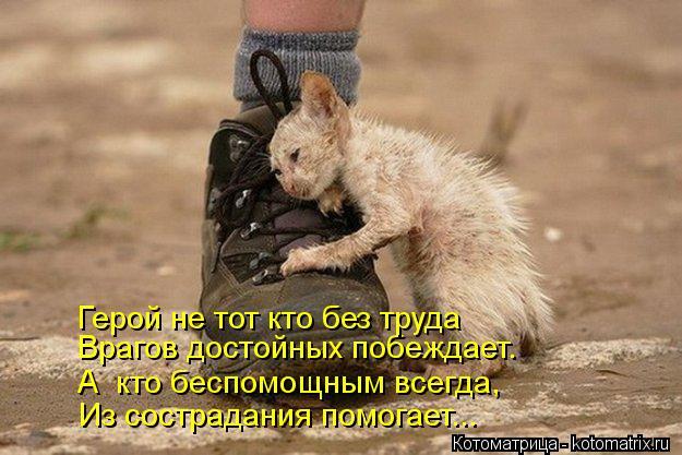 Котоматрица: Врагов достойных побеждает. Герой не тот кто без труда Из сострадания помогает... А  кто беспомощным всегда,