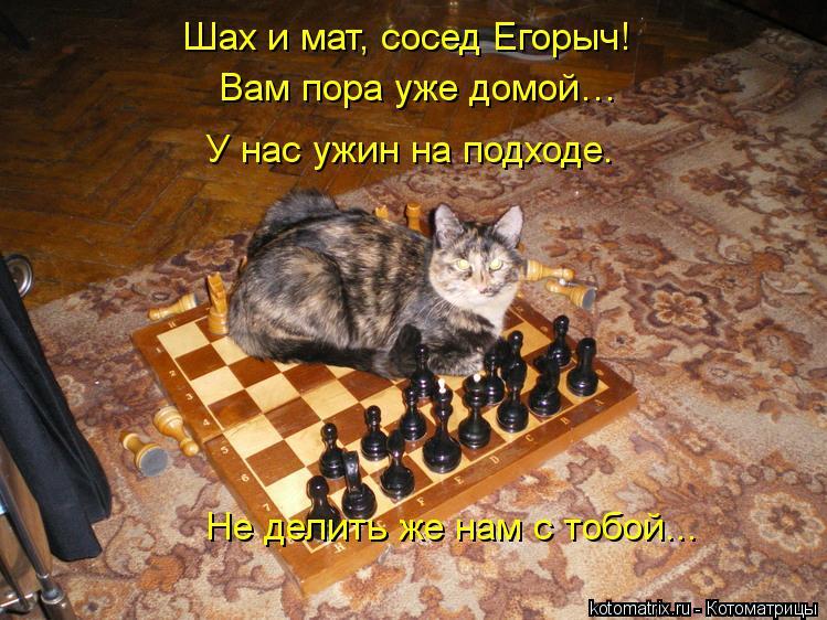 Котоматрица: Шах и мат, сосед Егорыч! Вам пора уже домой… У нас ужин на подходе. Не делить же нам с тобой...