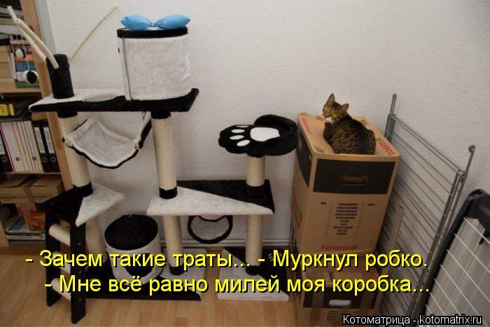 Котоматрица: - Зачем такие траты... - Муркнул робко.  - Мне всё равно милей моя коробка...