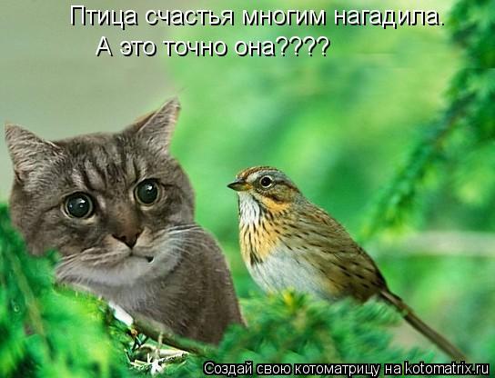 Котоматрица: Птица счастья многим нагадила.  А это точно она????