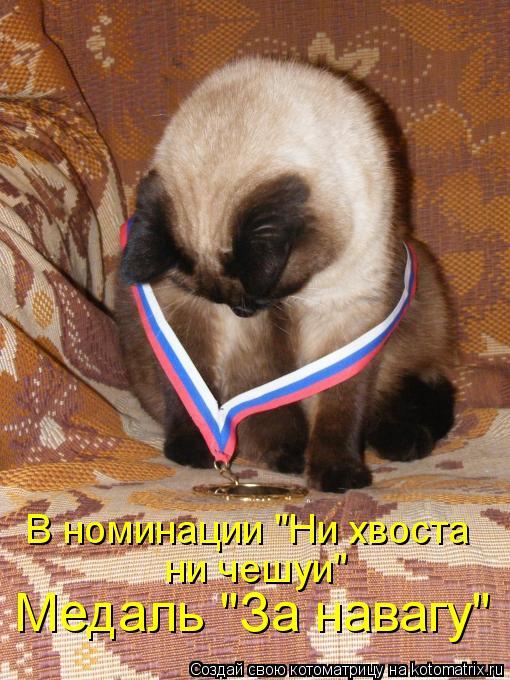 """Котоматрица: Медаль """"За навагу"""" В номинации """"Ни хвоста  ни чешуи"""""""