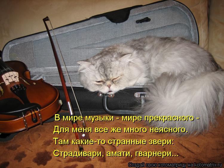 Котоматрица: В мире музыки - мире прекрасного - Для меня все же много неясного. Там какие-то странные звери: Страдивари, амати, гварнери...